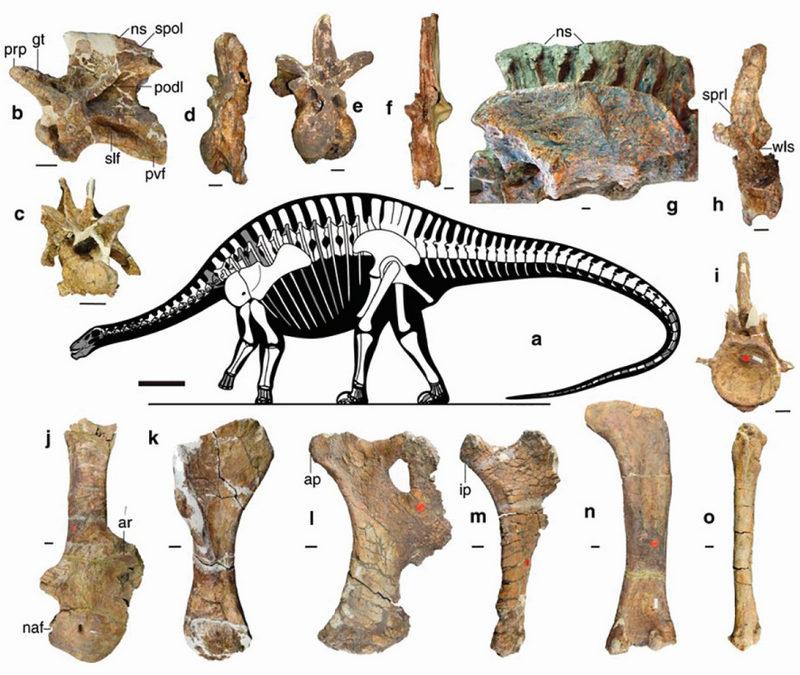 Diplodocus dinó