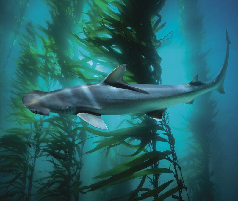 Salátaevő cápák